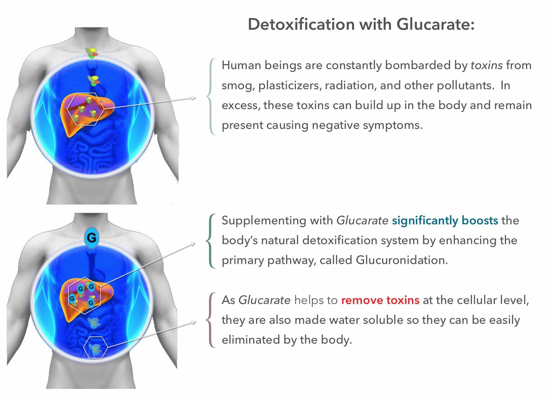 Glucarate by AFS for Detoxification Infographic
