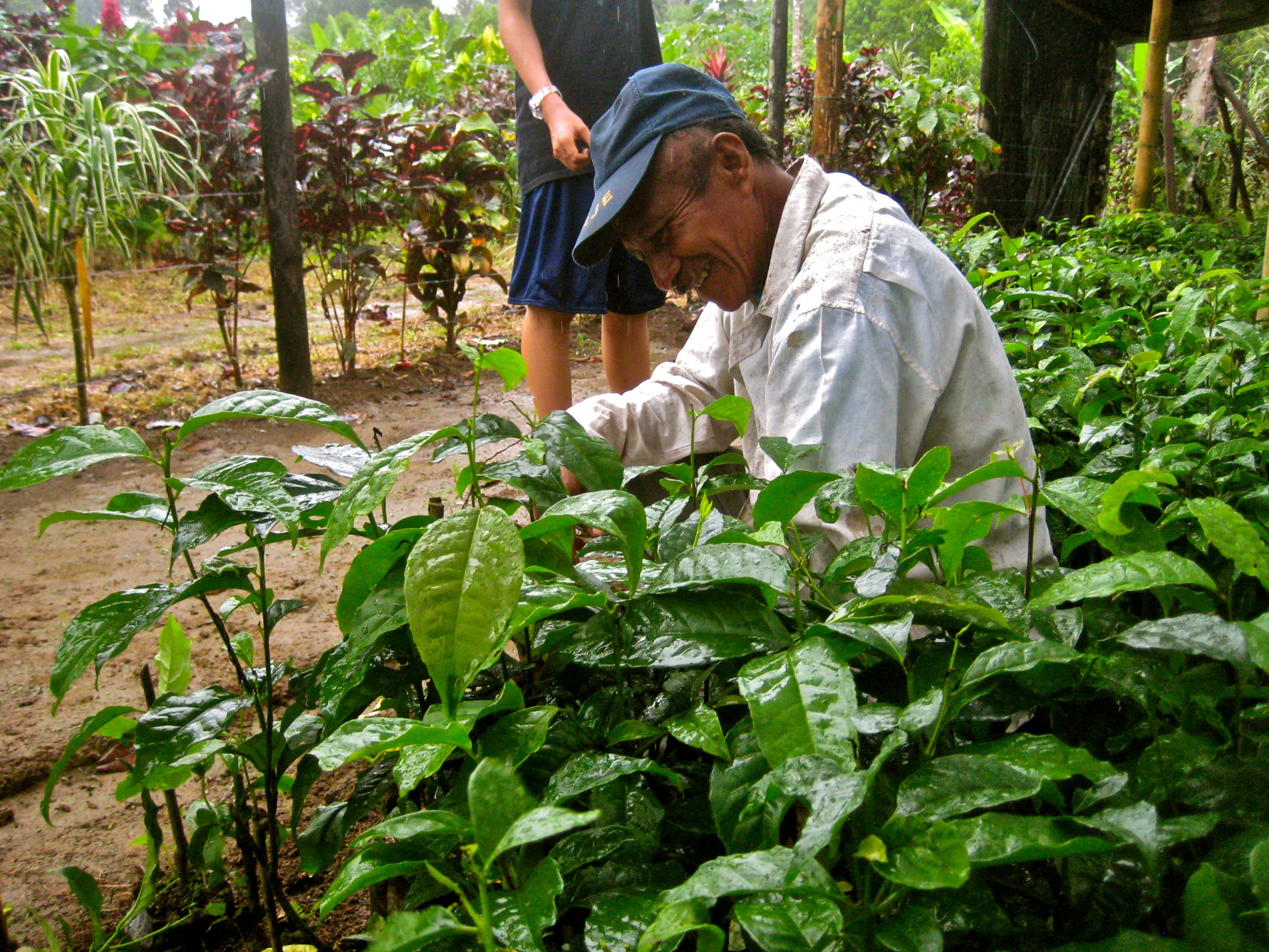 Farmer inspects Guayusa plants. © Applied Food Sciences, Inc.