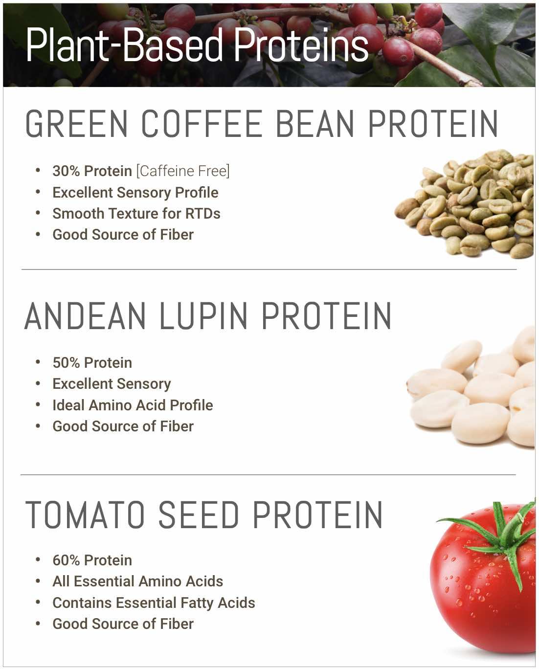 Plant Protein from coffee tomato seed and Andean lupin