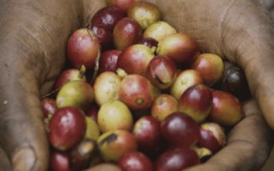 Ingredient Manufacturer Announces Non-GMO Project Verified Caffeine Ingredient
