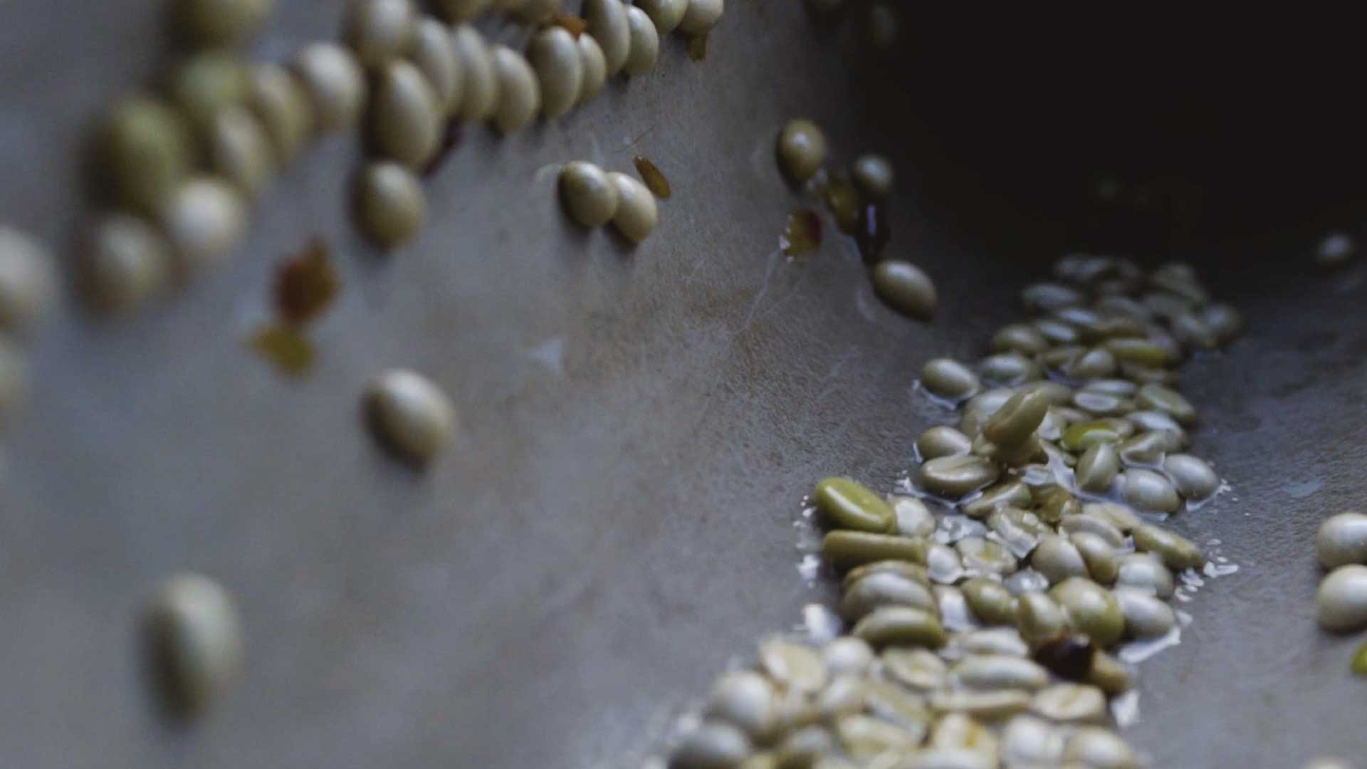 The coffee beans are separated by weight in a water channel. ©Applied Food Sciences, Inc.