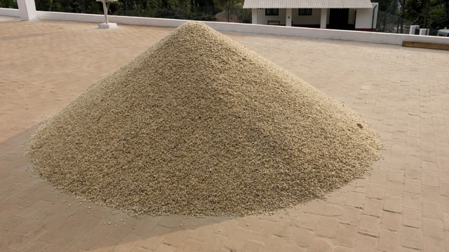 Green coffee beans dried and stacked in pile. © Applied Food Sciences, Inc.