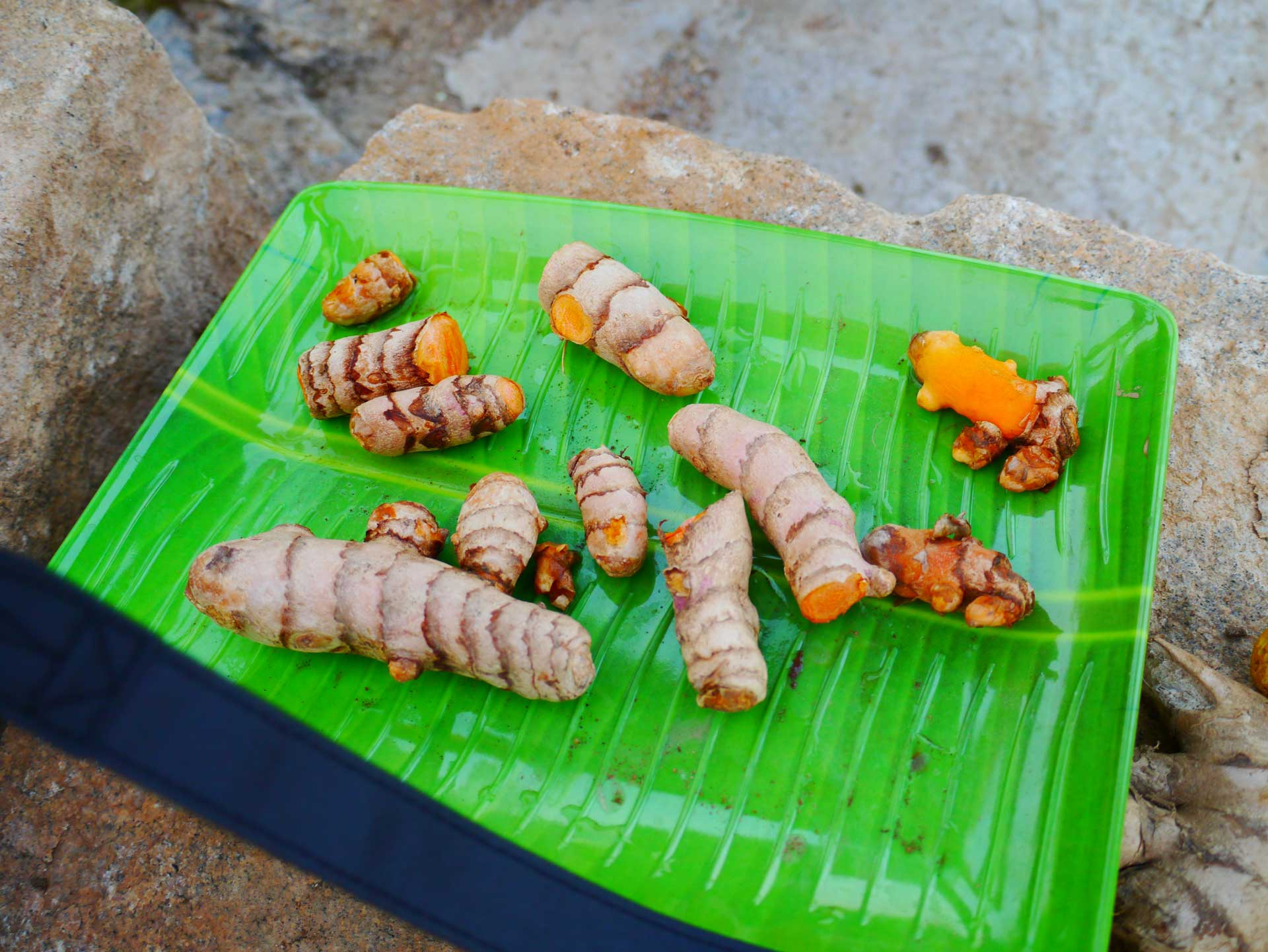Turmeric samples from the farm. © Applied Food Sciences, Inc.