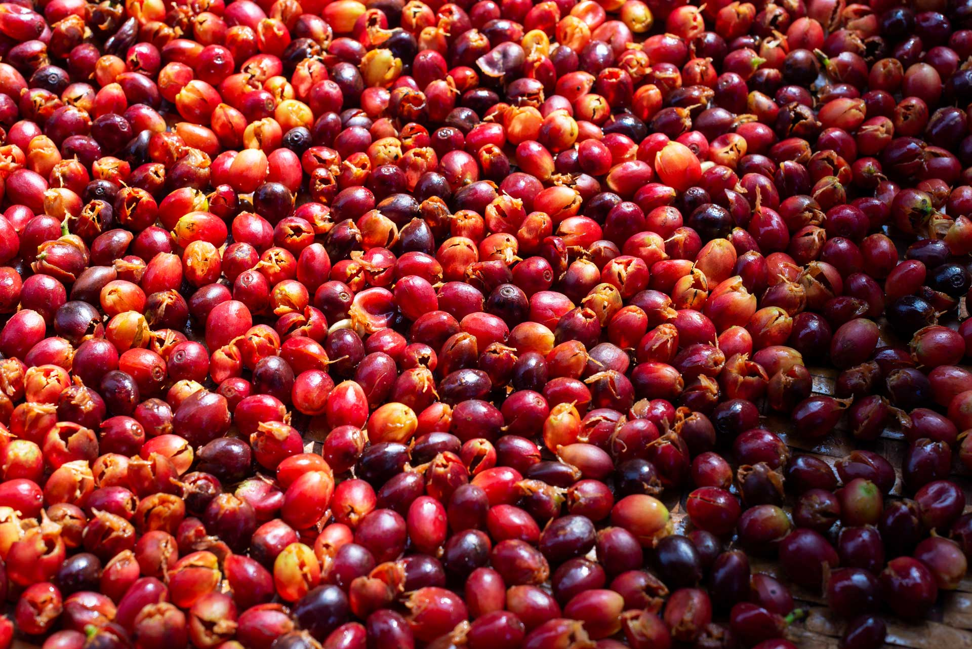 Pitted coffee cherries.